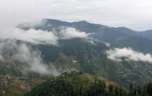 Forest Gaze Guesthouse, Shimla