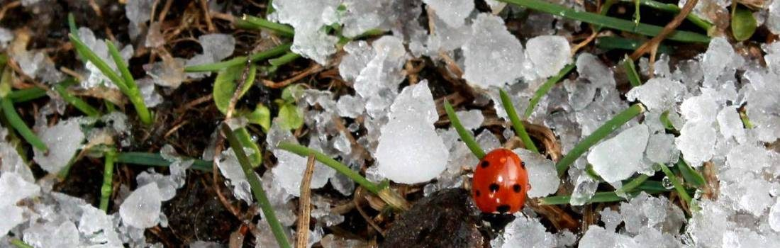A Ladybug seen in a hike to Triund, Himachal Pradesh