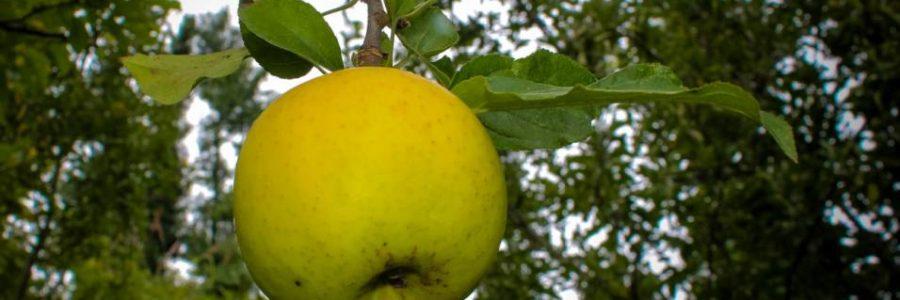 fruit orchard visit
