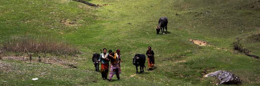 Camping trips in Uttarakhand mountains