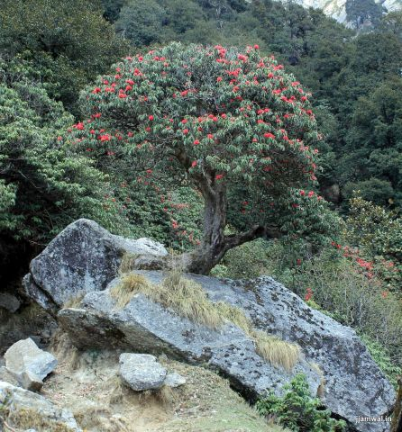 himachal-pradesh-travel himalayas mountains