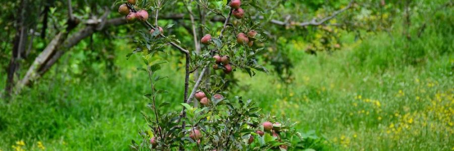 soul mountain cottages orchard